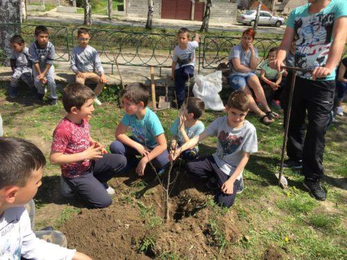 Ще садим дръвчета